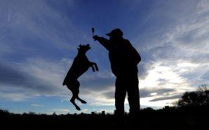 Vierbeinige Motivationstrainer – wie gut sind Hunde für Gesundheit?