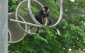 Zoos der Zukunft: Wenn Affen das Affenhaus selbst managen